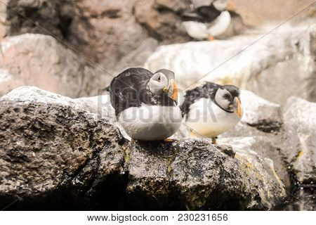 Picture Of Wild Penguin Animal Bird Playing