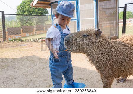 Capybara, Animal, Nature, Mammal, Wildlife, Brown, Hydrochoerus, Hydrochaeris, Wild, Fur, Cute, Gras