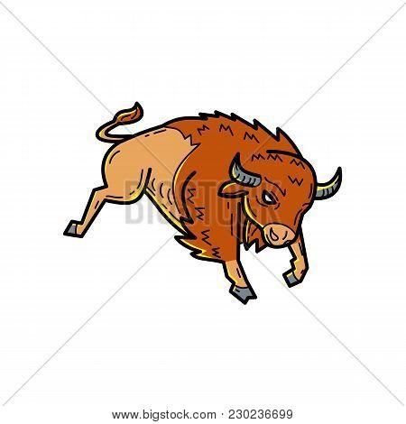 Mono Line Illustration Of An American Bison, American Buffalo Or Simply Buffalo, A North American Sp