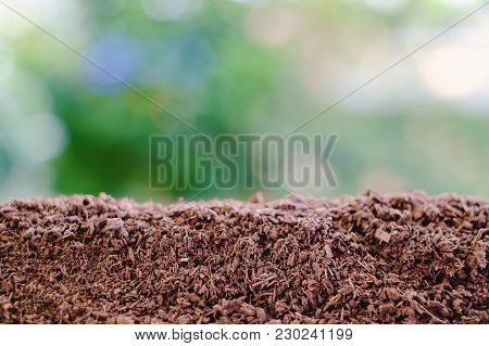 Soil Against Blurred Natural Green Background For Natural, Environment And Agriculture Concept