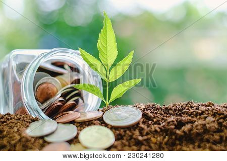Plant Growing From Soil With Coin In The Glass Jar Against Blurred Natural Green Background And Copy
