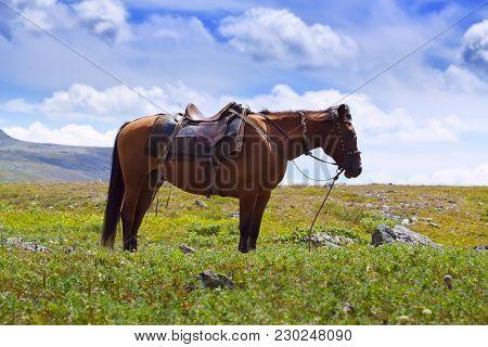 Image Of Saddled Horse Against Mountains Landscape