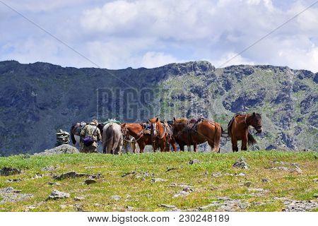 Image Of Few Saddled Horses In Mountains