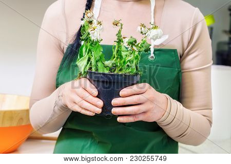Woman With Withered Flower In Pot In Room