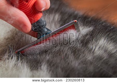 Grooming Undercoat Dogs. Comb Out Dog Wool Brush, Close-up. Concept Hygiene And Care For Dogs. Probl
