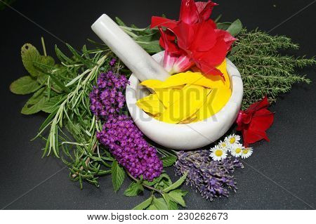 Homeopathy, The Alternative Medicine Healing With Natural Medicinal Herbs And Flowers Of The Nature