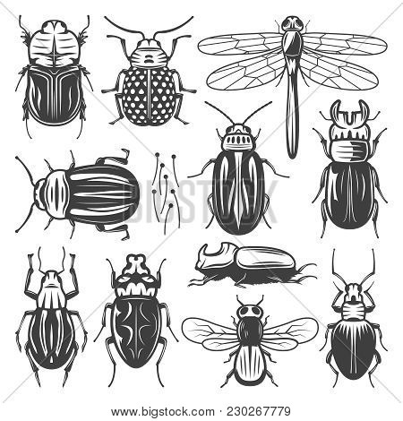 Vintage Insects Collection With Fly Dragonfly And Different Types Of Bugs And Beetles Isolated Vecto