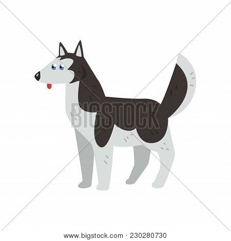 Siberian Husky Dog Character, Purebred Dog Vector Illustrations Isolated On A White Background.