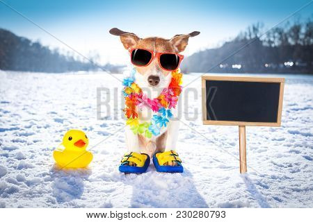 Cool Funny Freezing Icy Dog In Snow With Sunglasses And Flower Chain , Waiting For The Summer To Com