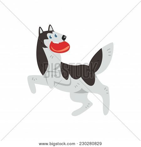 Siberian Husky Dog Character Playing With Red Disk Vector Illustrations Isolated On A White Backgrou