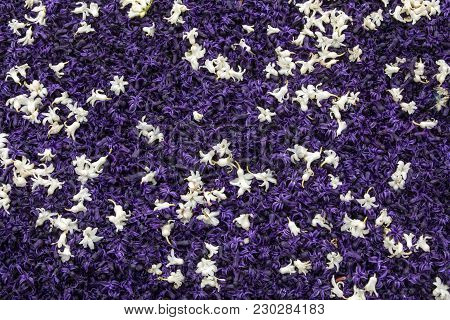Abstract Background . Close-up Of Violet And White Hyacinths Flowers