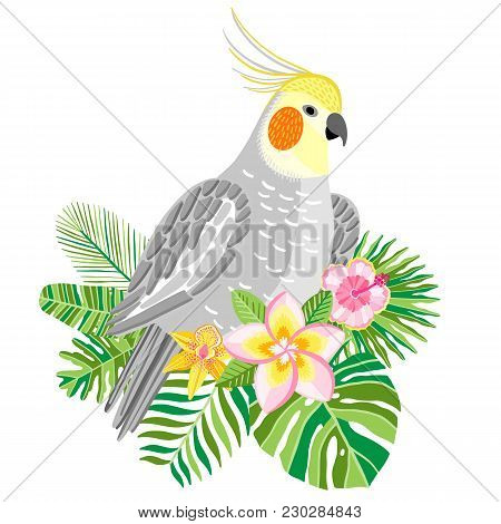 Parrot Cockatiel Vector, Tropical Bird Ilustration Isolated