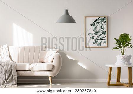 Palm In Minimalist Living Room