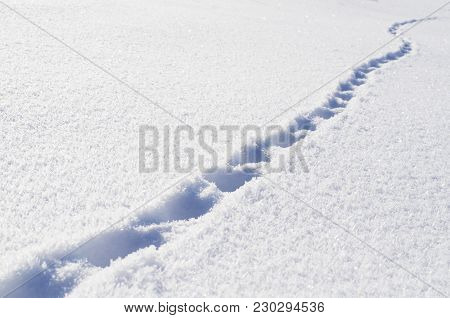 Footprints Of The Beast In The Fresh Snow