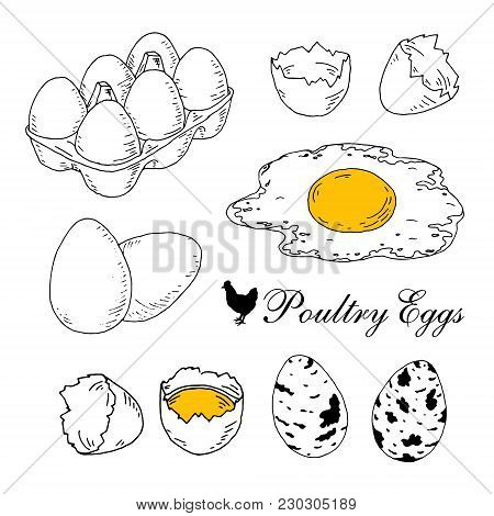 Poultry Eggs Collection. Fresh, In Box, Boiled, Scrambled Eggs. Hand Drawn Line Art Vector Illustrat