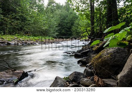 The Mountain River. River In The Forest. Narrow River.