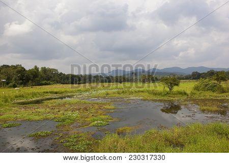 A Sri Lankan Mirror Lake With Lotus And Hyacinth Near Woodland And Mountains In Wasgamuwa National P