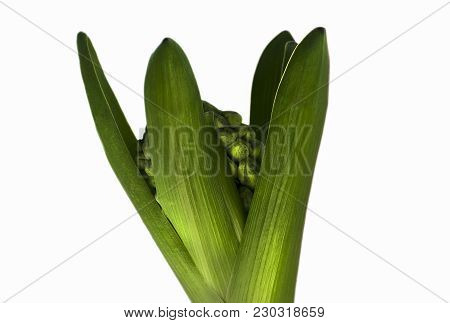 The Green Plant On A White Background