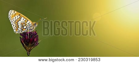 Web Banner Of A Small Butterfly With Copy Space - Spring, Summer Concept