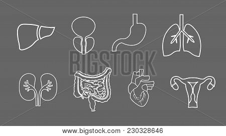 Human Organs Set. Anatomy Of Body. Reproductive System, Lungs, Uterus, Stomach Heart Liver Illustrat