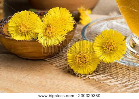 Closeup Of Fresh Coltsfoot (tussilago Farfara) Flowers On A Table