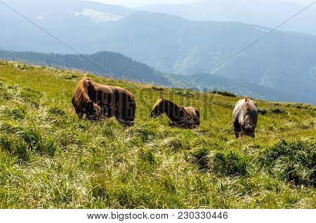 Three Horses In The Reserve. Horses Walking In The Mountains. House Horses.