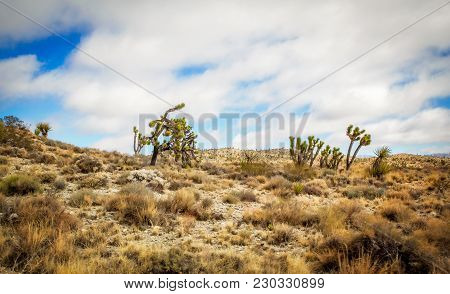 Joshua Trees Dotted In A Rocky Desert In A Nevada Spring Time Landscape Under A Cloudy Sky