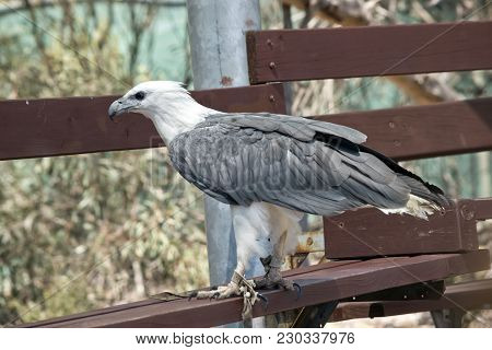 The Sea Eagle Is Perched On A Wooden Bench