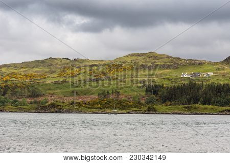 Kylesku, Scotland - June 8, 2012: Green Hills With Yellow Broom Flowers Plus White Farm Building. Ky