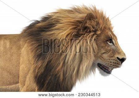 Lion African Feline Dangerous Hunter, Close View. 3d Rendering