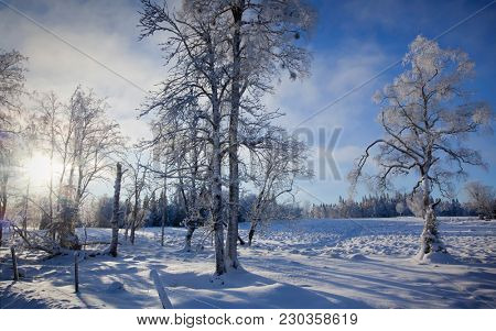 Winter landscape with some snowflakes in the sky