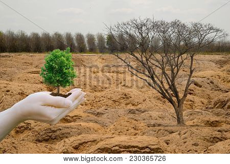 Ecology Concept Forest Drought And Forest Arid