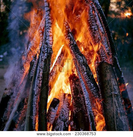 The Fire Burns In The Forest,the Crackling Of Dry Firewood.