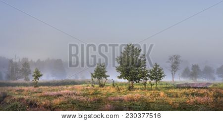 Lonely Trees On Green Misty Meadow Illuminated By Sunlight In The Morning. The Landscape Of The Morn