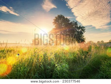 Vivid Summer Sunrise On Green Meadow And Sunbeams Through Tree In The Morning. Scenery Landscape Of