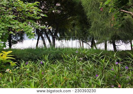 Set Of Tropical Greenery, The Grasses Among Which Are Rising Small Violet Flowers On And, Deciduous