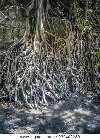 Color Outdoor Nature Detailed Close Up Image Of A Tree With Massive Roots And Green Leaves On The