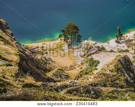 Amazing Tree Along Quilotoa Lagoon Shoreline, Volcanic Crater Lake In Ecuador