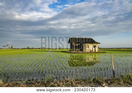 Dilapidated Wooden House In The Middle Of Paddy Field.motion Effect Clouds And Reflection In The Wat