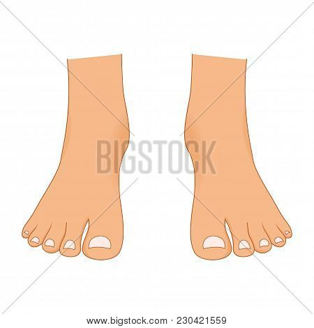 Beautiful Bare Woman Legs With A Pedicure Isolated On White Background. Female Body Parts Attractive