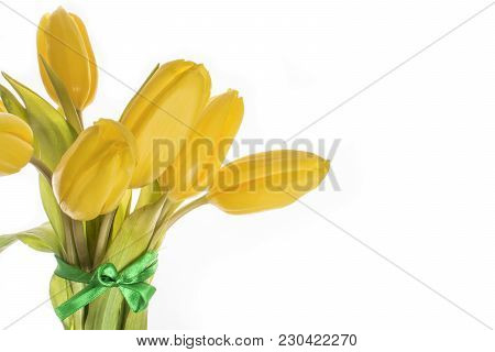 Yellow Tulips 7 Pieces On White Background Isolate