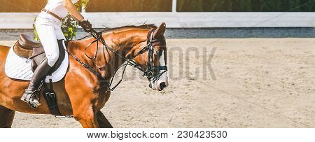 Beautiful Girl On Sorrel Horse In Jumping Show, Equestrian Sports. Light-brown Horse And Girl In Whi