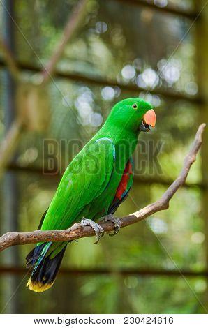 Blurred And Selective Rainbow Lorikeet (trichoglossus Haematodus) Bird With Blur Background