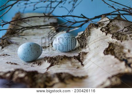 Easter Fresh Composition . Blie Decorative, Spotted Eggs On The Birch Bark.