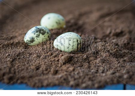 Decorative Quail Eggslie  In A Rough Brown Structure Background.