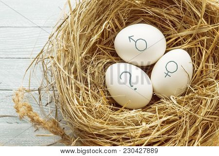 Eggs With Symbols Of Genders And Question Mark.