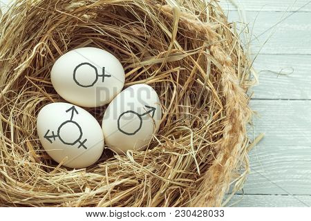 Eggs With Symbol Of Transgender, Female And Male Gender Symbols