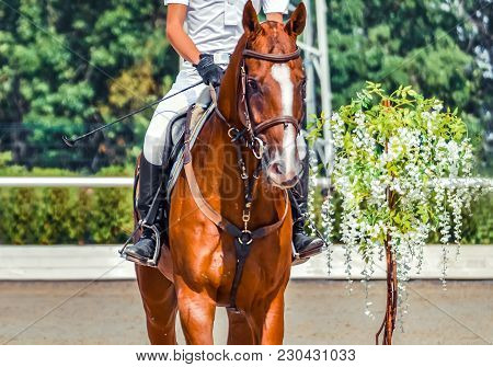 Man On Sorrel Horse In Jumping Show, Equestrian Sports. Light-brown Horse And Man In White Uniform G