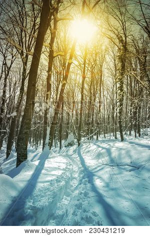 Sunny Day In The Forest Covered With Deep Snow, Digitally Altered.