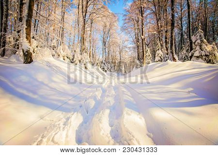 Pathway Going Thru The Deciduous Forest Covered With Deep Snow At Winter.